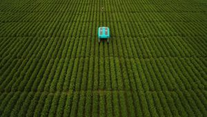 The plant buggy roams atop the crops, counting and analysing each