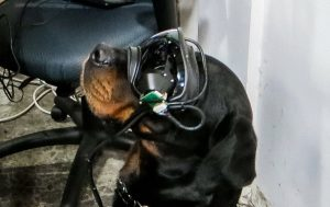 The prototype goggles are being tested on a rottweiler named Mater. Image: US Army